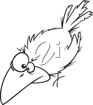 Royalty Free Clipart Image of a Crow Stooping
