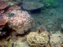 Royalty Free Photo of Tropical Fish and Coral