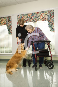 Royalty Free Photo of an Elderly Woman Using a Walker With a Woman Walking a Dog at a Retirement Community