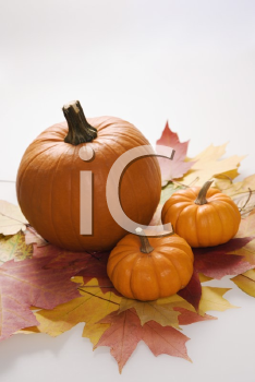 Royalty Free Photo of Pumpkins Sitting on Leaves