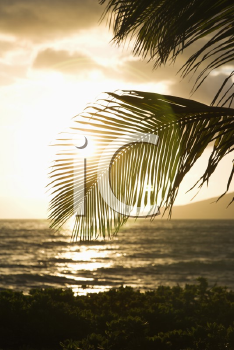 Royalty Free Photo of Palm Trees and a Sun Setting Over the Pacific Ocean in Maui, Hawaii