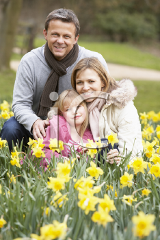 Royalty Free Photo of a Family in a Group of Daffodils