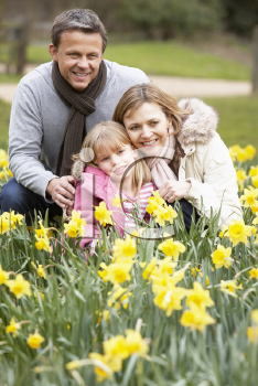 Royalty Free Photo of a Family in Daffodils