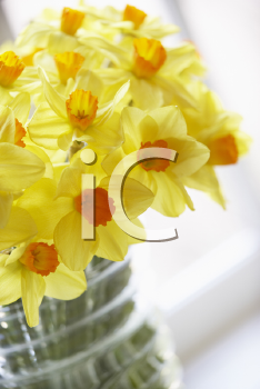 Royalty Free Photo of a Bouquet of Daffodils