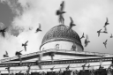 Royalty Free Photo of Birds Flying In Front Of the National Gallery, London, England