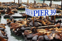 The well-known Pier 39 in San Francisco with sea lions. Animals are heated on wooden platforms