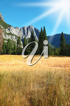 Dense autumn yellow grass in a mountain valley of Yosemite national park in California.