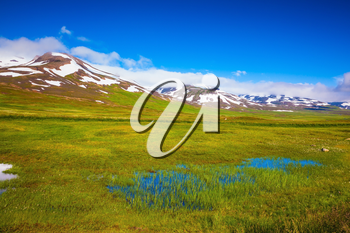 Summer Iceland. Small lake among the fields. The fields overgrown with fresh green grass