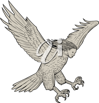 Drawing sketch style illustration of a harpy, in Greek and Roman, mythology, a female bird with a woman's face swooping looking down viewed from the side set on isolated white background.