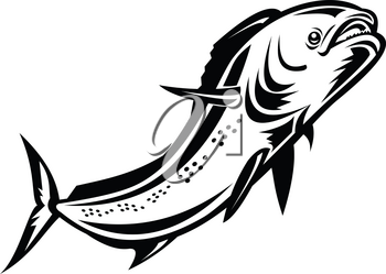 Retro style illustration of a mahi-mahi, dorado or common dolphinfish (Coryphaena hippurus), a surface-dwelling ray-finned fish, jumping up done in black and white on isolated background.