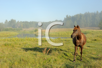 Royalty Free Photo of a Horse in a Field and Mist Over the Water