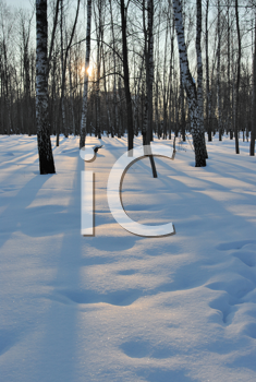 Royalty Free Photo of Shadows Through Trees in Winter