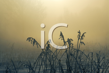 Royalty Free Photo of a Plants in Winter and the Sunrise Behind