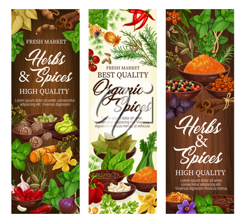 Spices and herbs, organic cooking seasonings and herbal culinary flavoring. Vector chili pepper, vanilla or basil with sage, cinnamon and garlic, celery with anise and ginger spice condiments