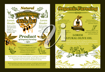 Olive oil product poster or brochure template of green olives and organic farm cooking oil. Vector design of leaf branches on bottle and olive oil jars for Spanish or Greek product