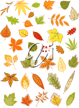 Colorful autumn leaves in a variety of shapes, colors and sizes, vector illustration isolated on white