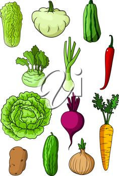 Fresh farm cabbage, cucumber, carrot, onion, potato, chili pepper, chinese cabbage, scallion, zucchini, beet, pattypan squash and kohlrabi vegetables. For vegetarian food and agriculture harvest theme