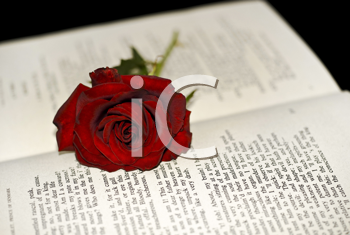 Red Rose on the book (shallow DOF)