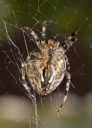 Vertical view - Close-up of Beautiful spider on the web