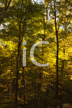 Royalty Free Photo of a Forest in Fall