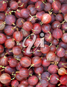 Gooseberry fruits close-up background