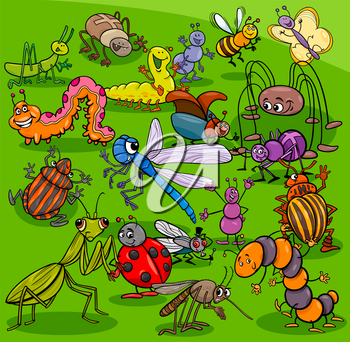 Cartoon Illustration of Insects and Bugs Animal Characters Group