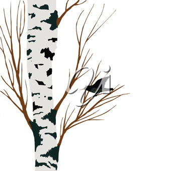 Royalty Free Clipart Image of a Bird in a Birch Tree