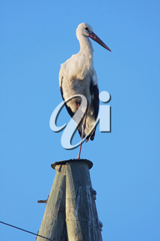 Royalty Free Photo of a Stork on a Post