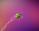 Angelfish jumping, good concept for Recklessness and challenge concept.