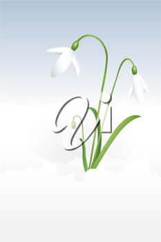 Royalty Free Clipart Image of a Snowdrop
