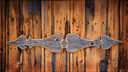 Old timber background in warm tones, with a decorative panel and space for your text.