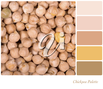 A background of dried chickpeas, in a colour palette with complimentary colour swatches.