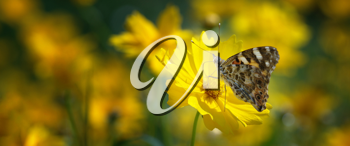 Royalty Free Photo of a Butterfly on a Flower