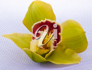 Elegant green orchid on the textile background