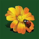 Royalty Free Clipart Image of a Ladybug on a Flower