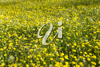 Royalty Free Photo of a Field of Flowers