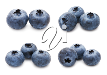 Collection of fresh blueberry or bilberry  isolated on white background