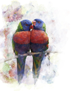Watercolor Digital Painting Of Rainbow Lorikeet Parrots