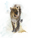 Watercolor Digital Painting Of  Leopard