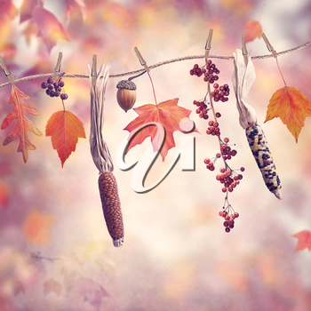 Autumn composition on colorful leaves background