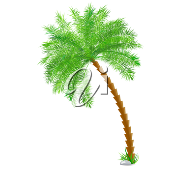 Tropical palm tree over white. Vector background