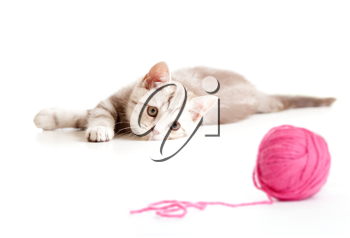 Royalty Free Photo of a Kitten Playing With a Ball of Yarn