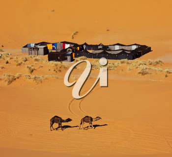 Royalty Free Photo of a Bedouin Camp in the Sahara Desert in Morocco
