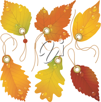 Royalty Free Clipart Image of a Leaf Tags