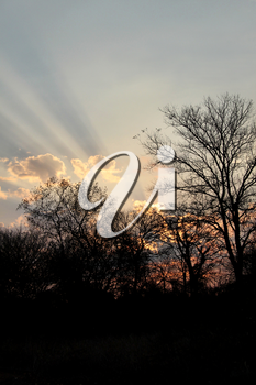 Royalty Free Photo of a Typical South Afica Bushveld Sunset With Silhouetted Trees