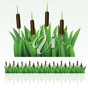 Royalty Free Clipart Image of Grass and Cattails