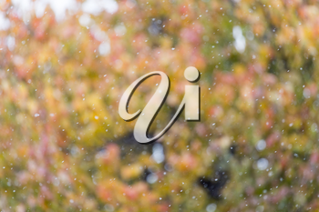 the first snow in the autumn as a background