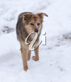 dog running outdoors in winter