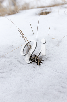 dry grass in the snow on the nature