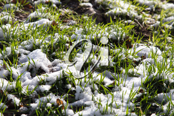 snow on the green grass in nature